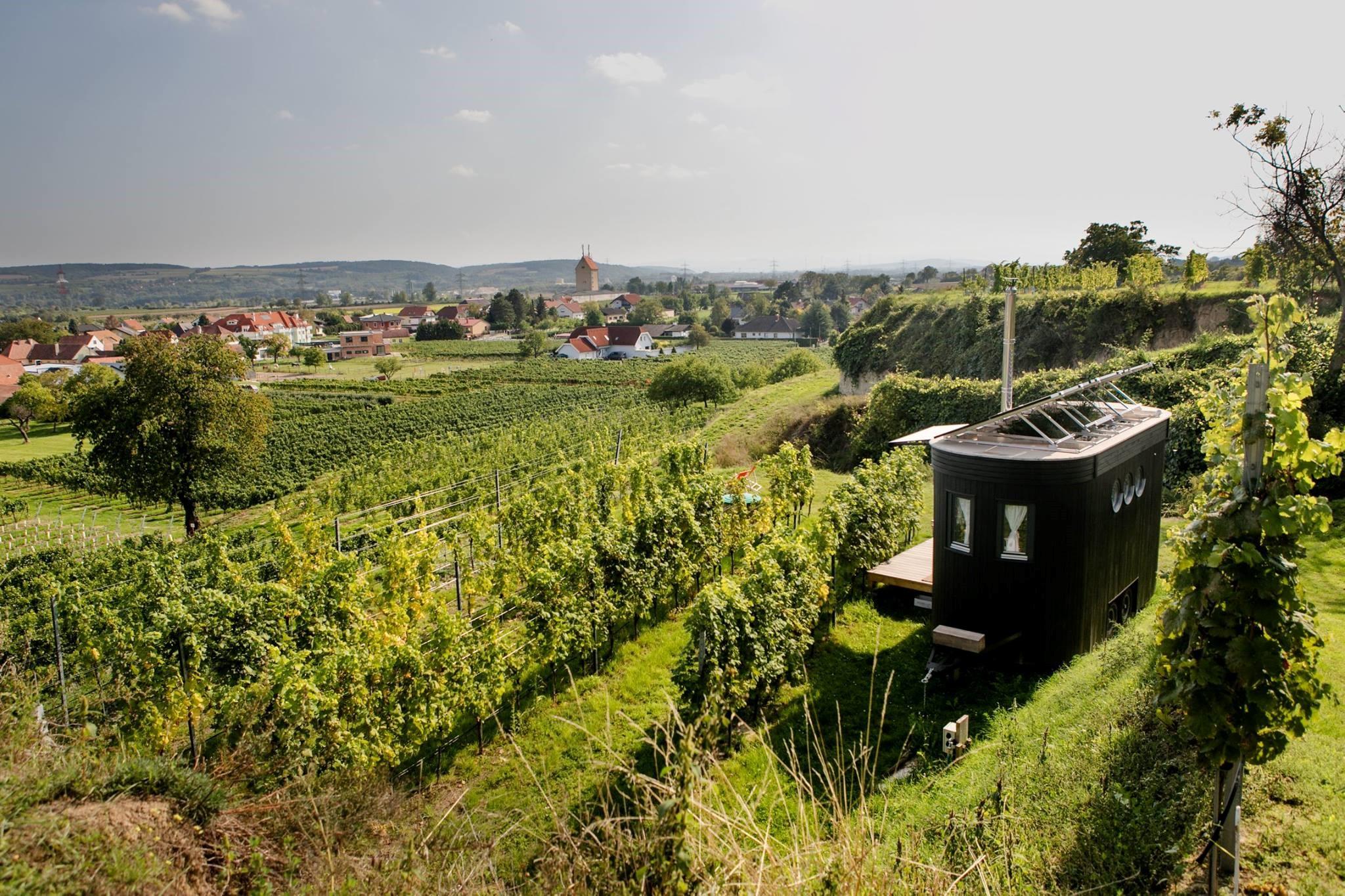 Karl Kaltwasser inmitten von Weinreben